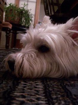 winston-handsome-hound.jpg