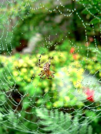 spiderweb-dew.jpg